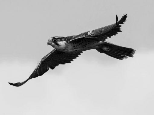 Falcon Group